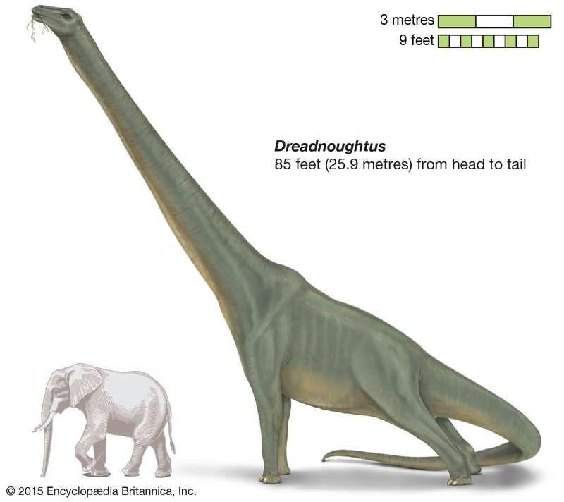 Titanosaurs : 세계에서 가장 큰 공룡 8 종