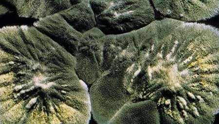 Σήμα Pénicillium