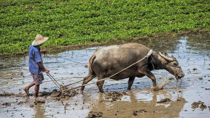 Klimaat van Vietnam